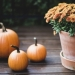 The List: 6 Ways Your Fall Decor Could Be More Sustainable
